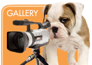 Angel Pet Sitters Gallery